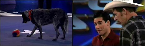 hund, hunde, dog, dogs