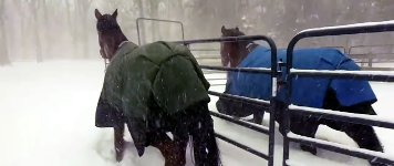 Pferde Schnee Stall