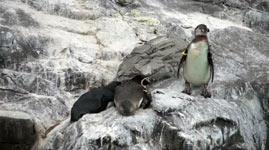 pinguin, drecksack