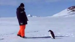 pinguin greift an