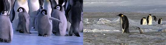 Penguin Fail - Best Bloopers