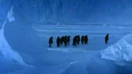pinguine sturz