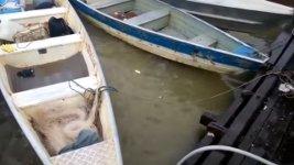 Brasilien Piranhas füttern