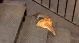 Pizza Ratte New York