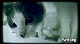 Raubkatzen im Supermarkt