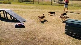 Remote Control Car Hunde