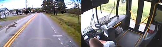 Reh, Bus, Unfall