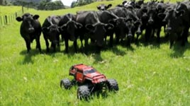 ferngesteuertes Auto, Kühe