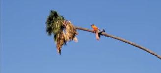 Palme schneiden Baumstamm