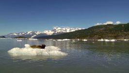 Robbe Seehund erschrecken