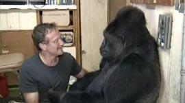 Robin Williams und Koko der Gorilla
