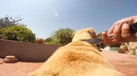 Hund, GoPro, Meer