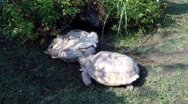 Erste Hilfe unter Schildkröten