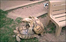 schildkröten futter, terrarium, zucht