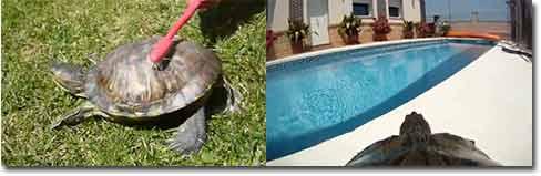 schildkröten, turtles, Unterwasser-Cam, Erste Hilfe, Zahnbürste