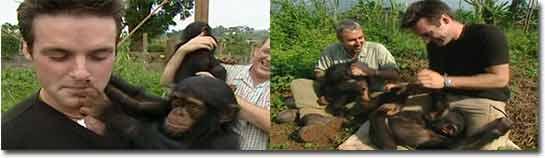 schimpansen, affen, pannen, bloopers