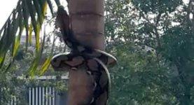 Schlange Baum klettern