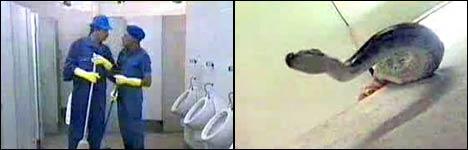 größte schlange, baby toilette, eau de toilette spray