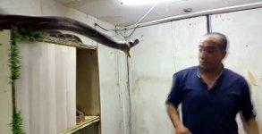 Schlangen Hand fangen