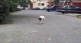 Hund, Katze, anschleichen