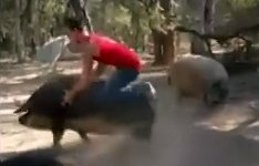 Schweinereiter Clash Royale