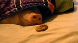 Schein, Kekse
