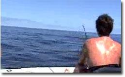schwertfisch, attacke, angriff, angeln