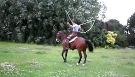 Seilspringen, Pferd, Horse