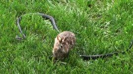 Hase Kaninchen Schlange