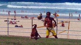 Hund Fussball Australien Strand