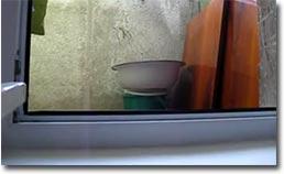 Katze, Fenster, spanner