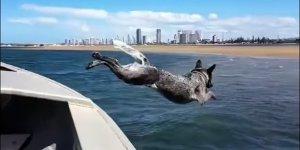 Speedboat Speeddog