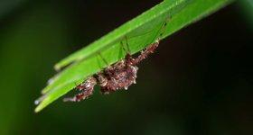 Spinne mit Superkräften