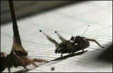 spinne, spinnen netze, angst vor spinnen