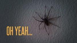 Wohnung Spinnen