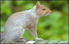 squirrel, eichhörnchen, tiere, tierfilme
