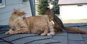 Katze, Eichhörnchen