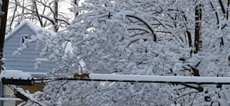 Schneepflug Eichhörnchen