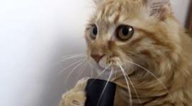 Katze, Staubsauger