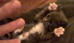 Surprised Kitty with Veruca James