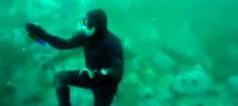 tauchen Hai