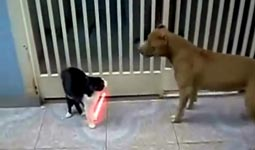 katze, hund, starwars, lichtschwert