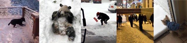 Winter Schnee Tiere Menschen