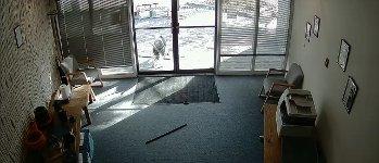 Ziege Tür Büro Scheibe