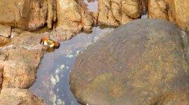 Tintenfisch Angriff Krabbe