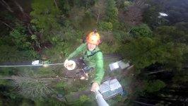 50 Meter Baum fällen