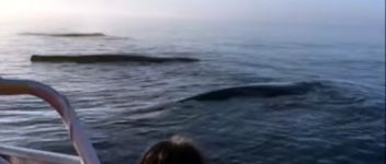 Triple Whale Breach Canada