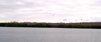 Blaufußtölpel Vogel Angriff