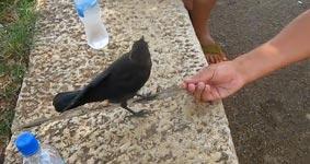 Vogel Durst