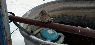 Vogel festgefroren